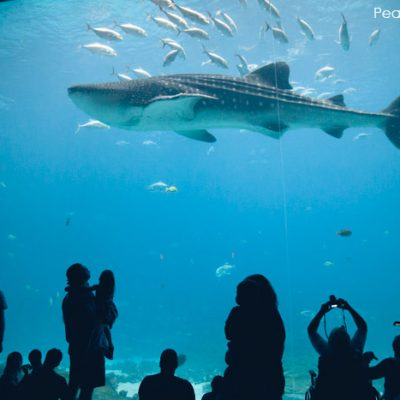 5 Must-see Moments at the Georgia Aquarium