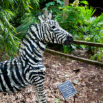 4 reasons to visit: a Riverbanks Zoo review