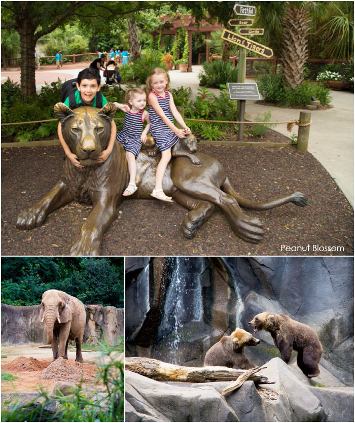 4 reasons to visit a Riverbanks Zoo review