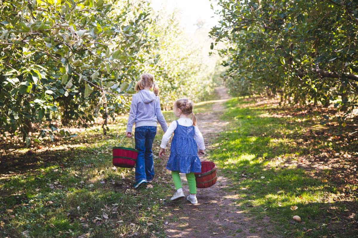 Two girls carrying baskets walk through an apple orchard.