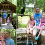 Visit the Carolina Raptor Center: a review for families