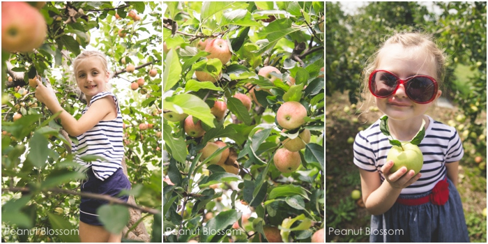 Fantastic apple picking near Charlotte, NC