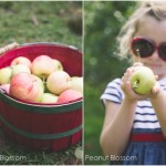 Fall adventures: Apple picking at Sky Top Orchard