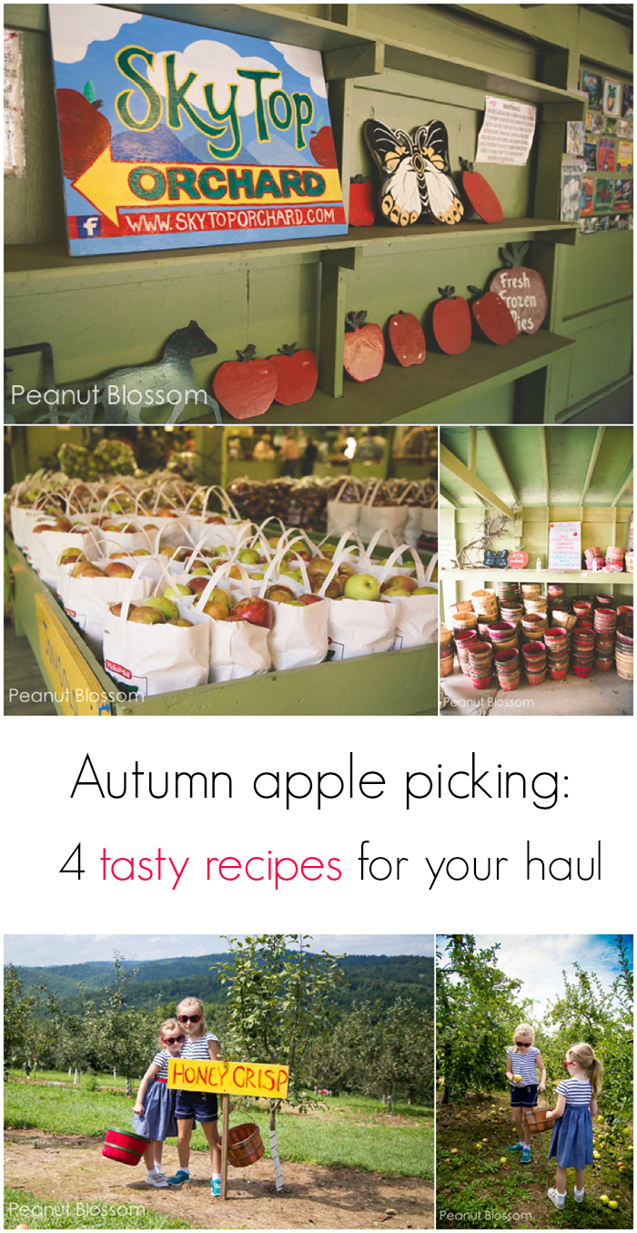 Go apple picking at Sky Top Orchard in Flat Rock, NC: 4 tasty apple recipes for your haul