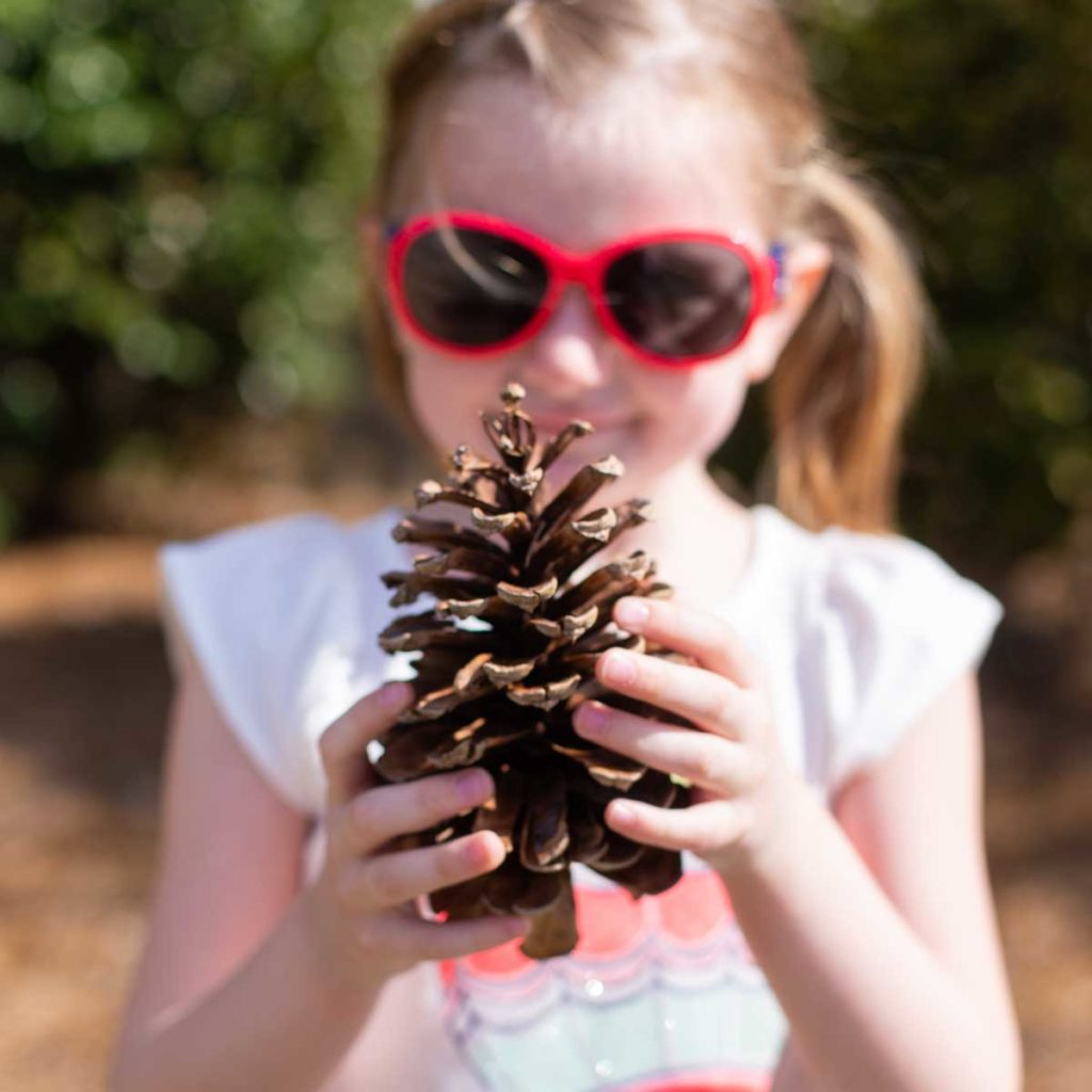 A young girl holds a giant pinecone.