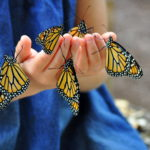 Gardening with Kids: butterfly friendly plants that attract fluttery visitors