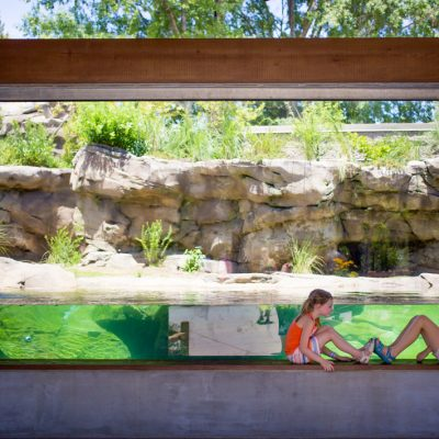 Wild times with the animals at Riverbanks Zoo