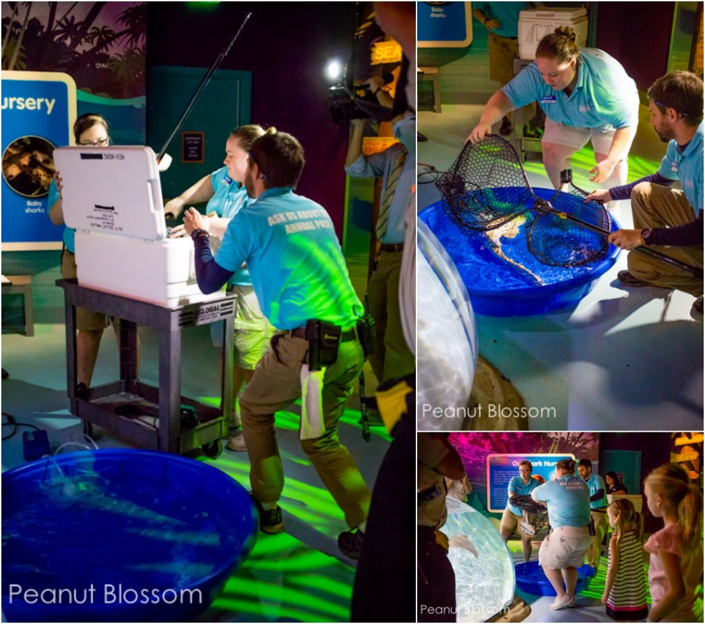The Charlotte aquarium: SEA LIFE in Concord does a shark release