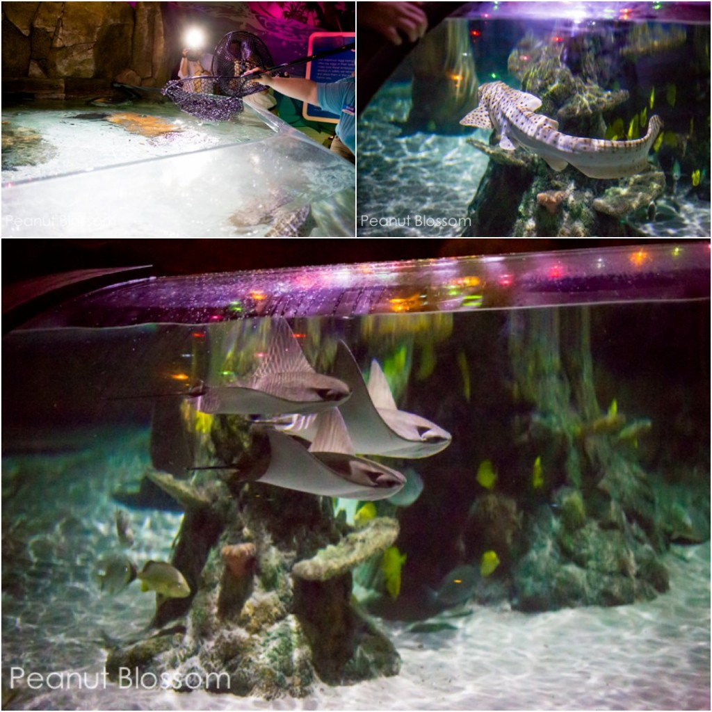 The Charlotte aquarium: SEA LIFE features gorgeous sting rays