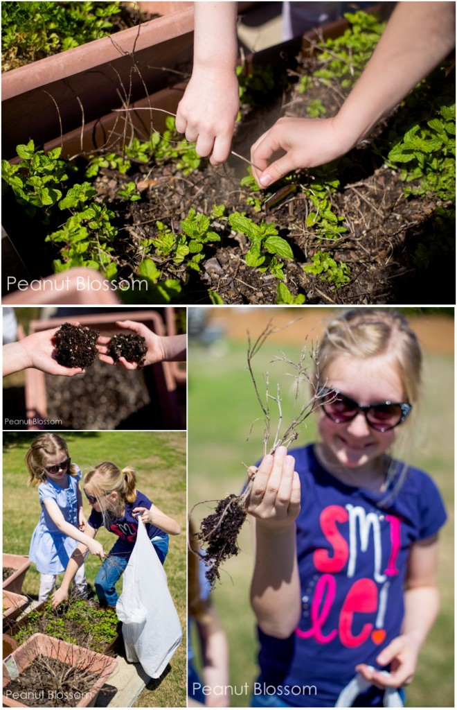 Get in the dirt! 5 Earth Day projects for kids
