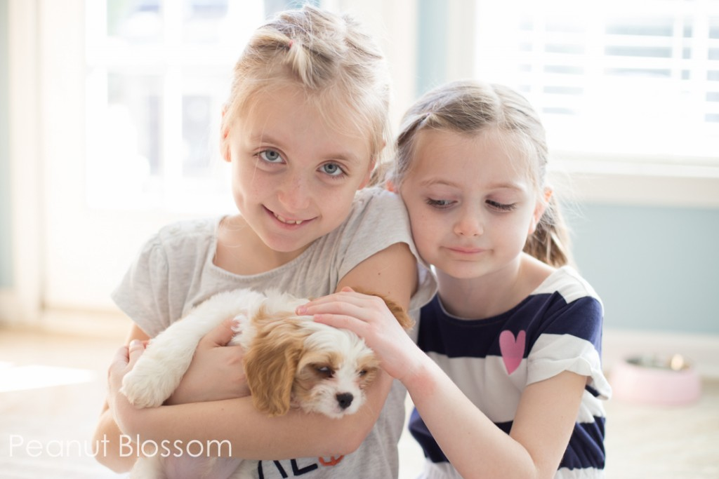 5 mistakes to avoid when bringing a puppy home to your kids