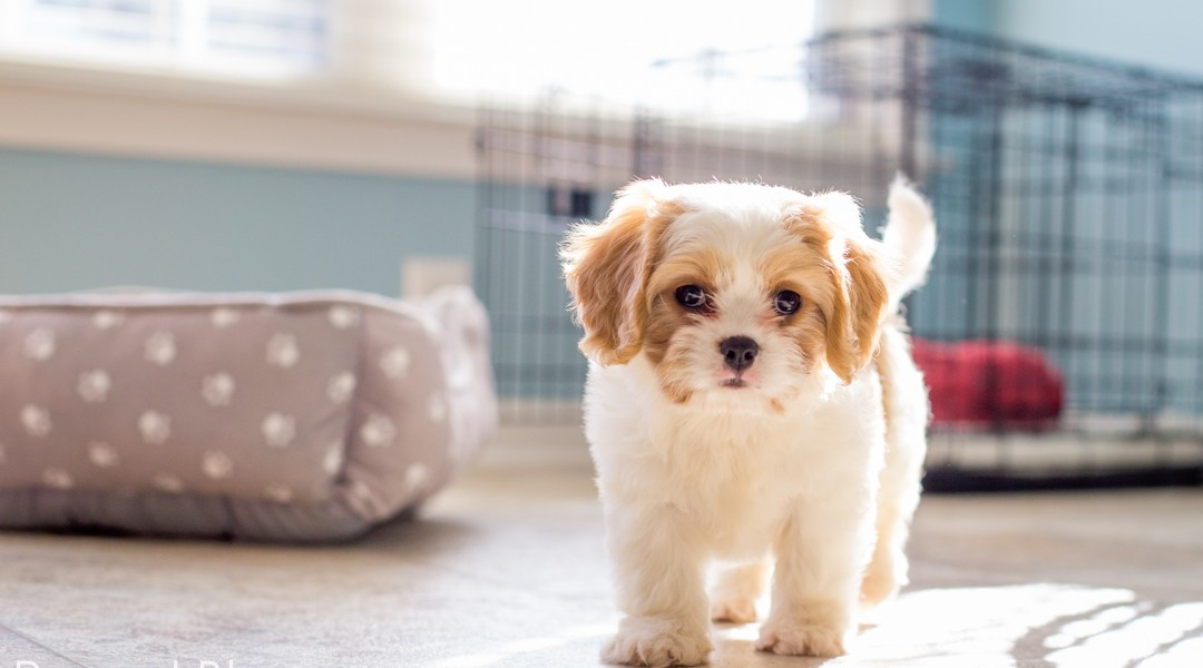 5 mistakes to avoid when bringing a new puppy home to your kids