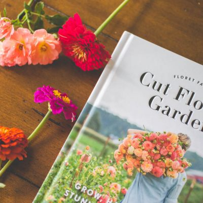 How to set up a cut flower garden for beginners