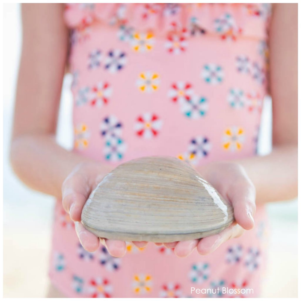 Collecting shells with kids at the beach: a fun travel activity for reconnecting with your kids.